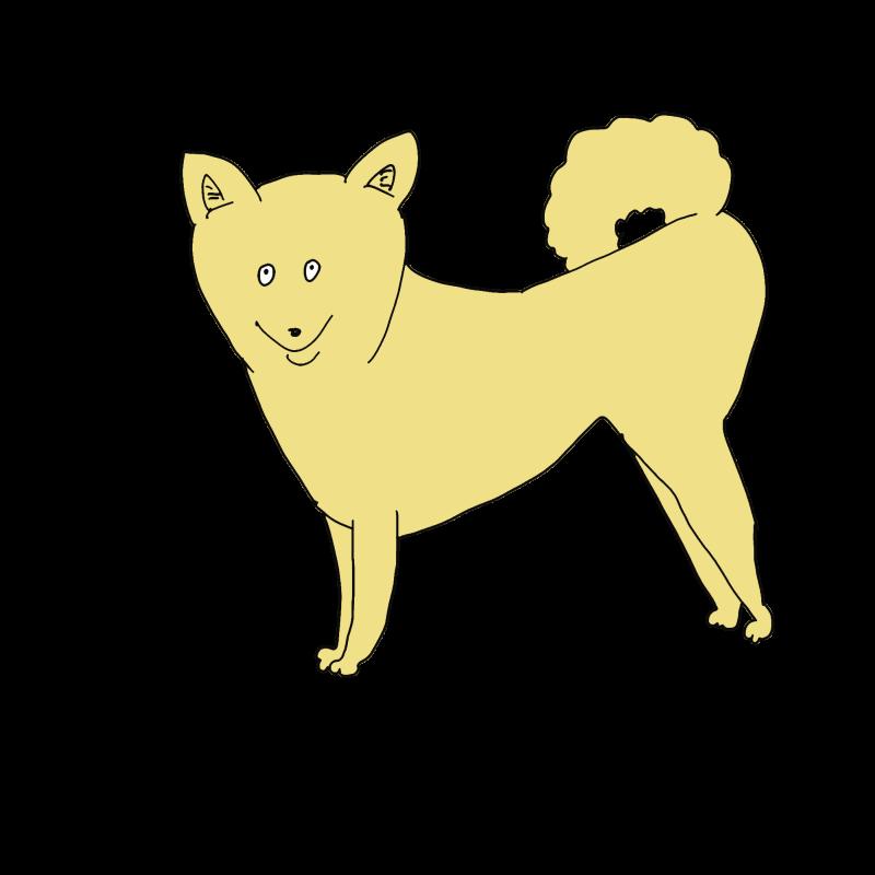 柴犬っぽい雑種